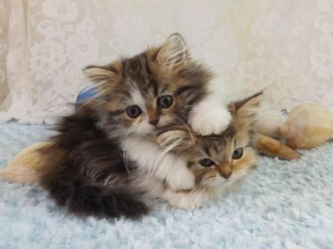 wellness canned kitten food